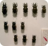 insect-pin-board