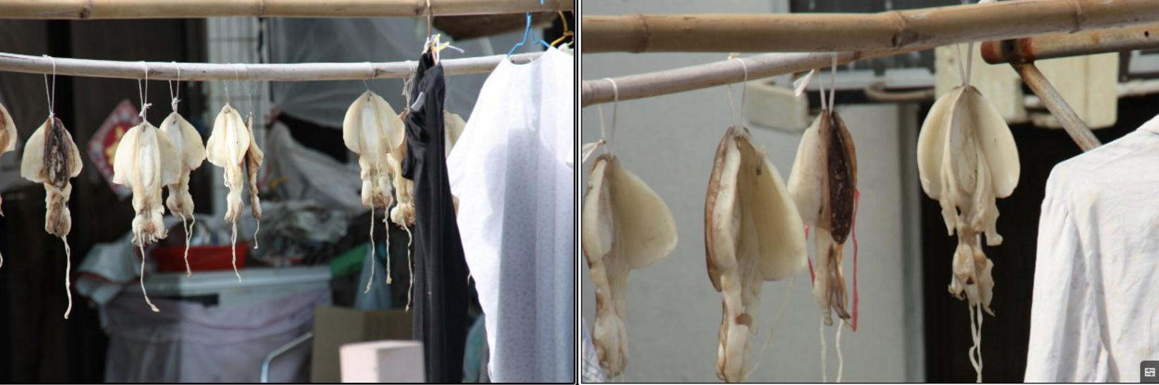 Drying cuttlefish at Hong Kong