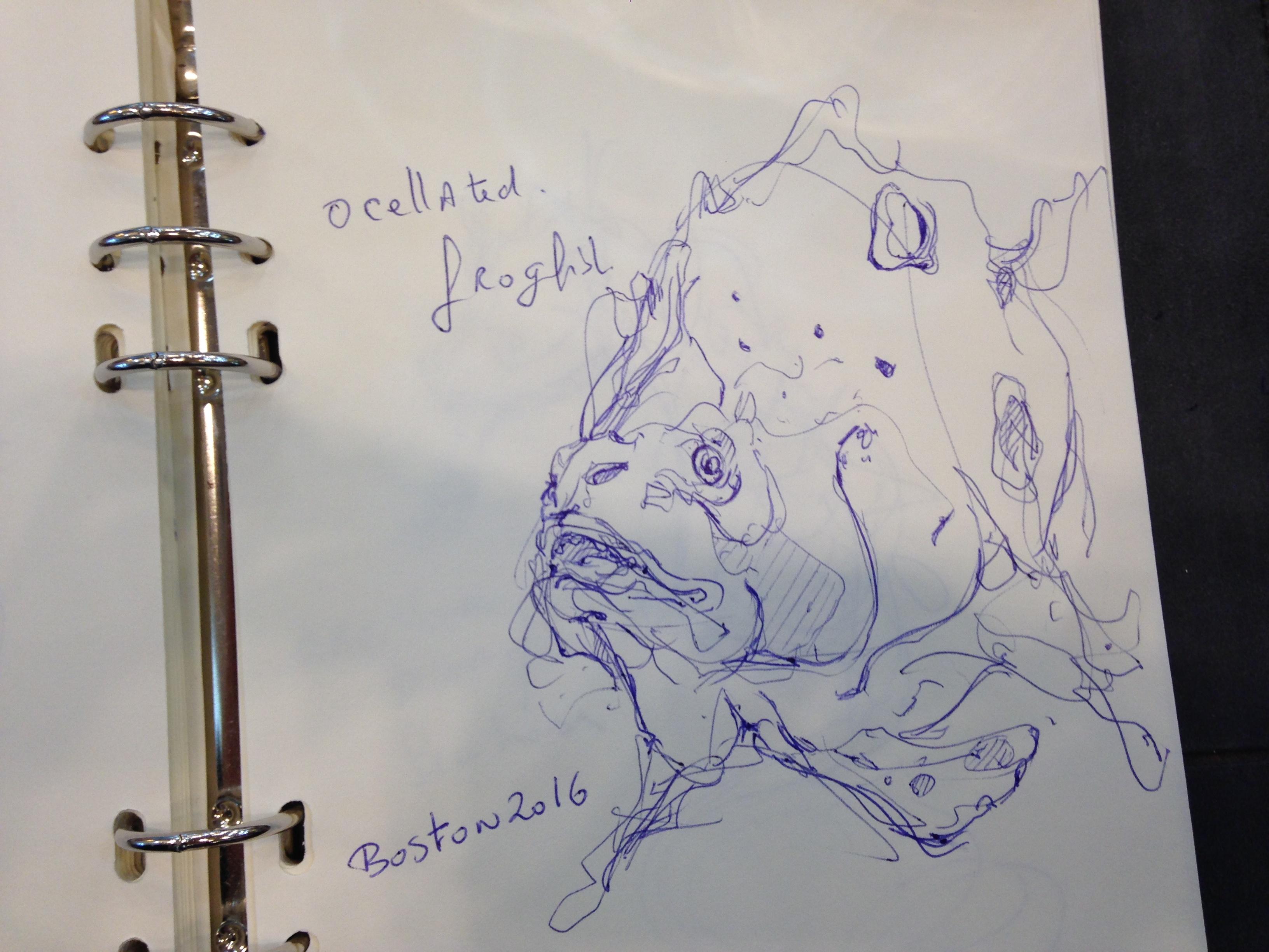the design sketchbook sketch boston acquarium fish drawing ball point pen blue bic c