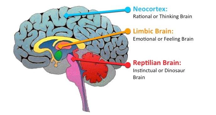 reptilian brain